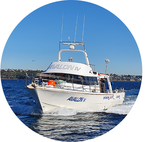 An image of The Avalon for the Wahoo Fishing Charter website.